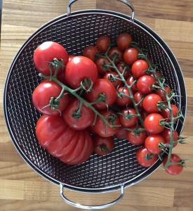 frische Tomaten vom Gemüsehof Schneiders