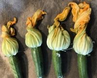 Zucchini-Blüten fertig gefüllt