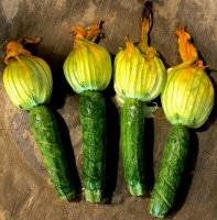 Zucchini-Blüten frisch aus dem Ofen