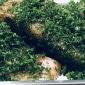 Knoblauchgarnelen  (Gambas al ajillo)  und geräuchertes Lachsfilet mit Kräuterkruste